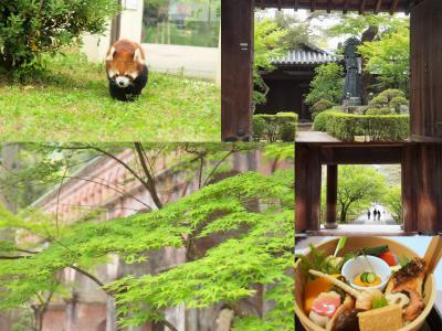 春の関西旅最終章<京都編> 妙心寺にお墓参り 南禅寺と京都市動物園でレッサーパンダ 六盛で手をけ弁当を楽しむ旅