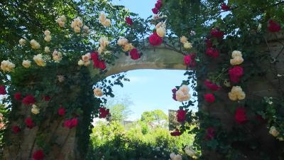 やっぱり薔薇はきれい!熱海の「アカオハーブ&ローズガーデン」が見頃です!