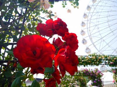 2017FIRSTハウステンボス♪ときめく薔薇の世界♪