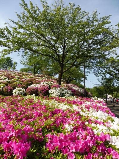 還暦夫婦の日本一周の旅①(一泊目は福井)