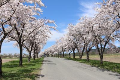 福島の桜はすごかったVol.2(2017年GW 再び福島の桜を見に猪苗代へ)