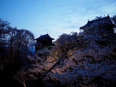 2017 第14回上田城「千本桜まつり」 『御美事』 聞きしに勝る美しさ!