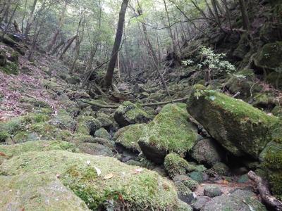 屋久島2017‐② 白谷雲水峡へ