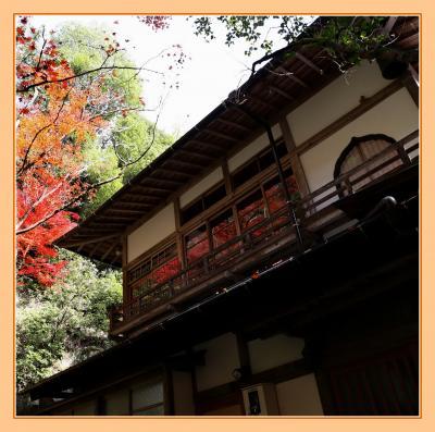 Solitary Journey[1838]色鮮やかな紅葉♪赤・黄・オレンジ・緑の葉っぱが織り成す美しいグラデーション<三滝観音>広島市西区