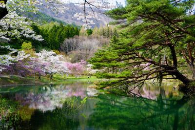福島の桜紀行・第2弾 -半田山自然公園ー