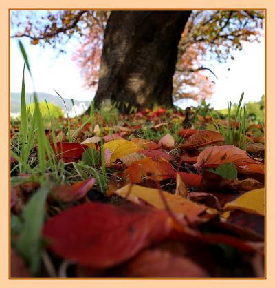 Solitary Journey[1839]美しい情景!落ち葉が散る太田川・元安川沿いをウオーキング♪<平和公園・原爆ドーム周辺>広島市中区