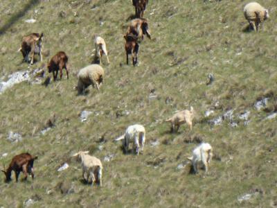 春の優雅なアブルッツォ州/モリーゼ州 古城と美しき村巡りの旅♪ Vol271(第10日) ☆Opiから美しい風景の中をBarreaへ♪