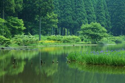滋賀を撮る♪ 高島花の浮島、長浜カンムリカイツブリ&米原三島池