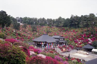 塩船観音寺のツツジ