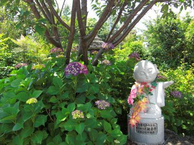 山陽花巡礼の旅・花の終着札所「観音寺」~あじさいの咲くお寺から花メッセージ~