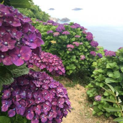 桃源郷岬で紫陽花