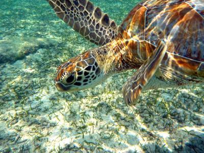 15.卒業旅行の沖縄 宮古島 アラマンダ2泊+前・後泊 シギラビーチのスキンダイビングその2 カラフルな魚たち 海亀と一緒に泳ぎます