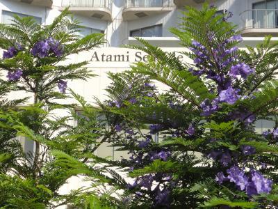 熱海のジャカランダ。お宮の松で有名な海岸通りは、紫色の並木になりました。