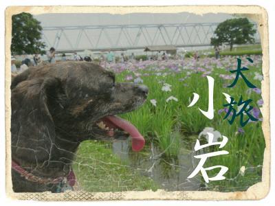 犬旅 ~小岩~