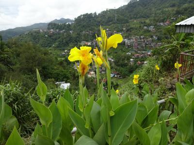 なぜ旅に出るんだろう? ましてやフィリピンの山岳地帯なんかへ(その17) ピープルズ、グリーン、ワンダー、三つのロッジ