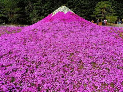 2017春の充電Part1:8回目の分杭峠に行く途中、富士芝桜祭りに寄ってみた
