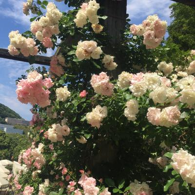 アカオハーブガーデン 満開のバラに包まれて