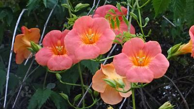 伊丹市 日の出撮影の帰り道・・・荒牧地区に咲く花。