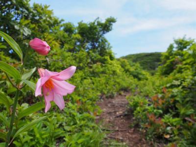 ヒメサユリ咲く浅草岳
