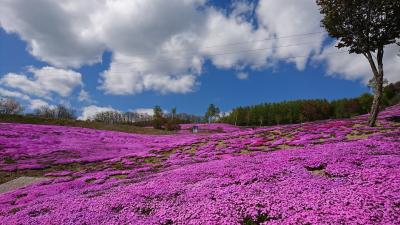 還暦夫婦の日本一周の旅⑩(滝上町の芝桜と上湧別町のチューリップ)