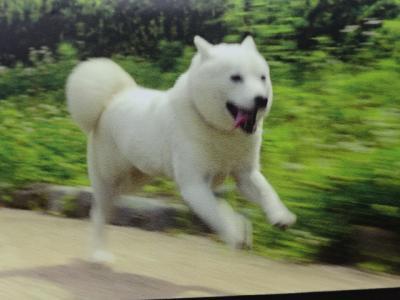 福井一乗谷朝倉遺跡、犬のお父さんの故郷でそばをいただく