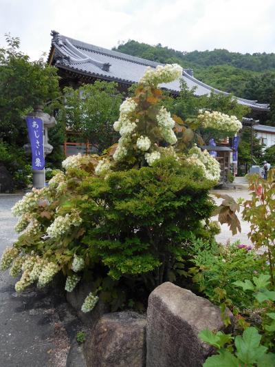 2017年7月 広島 湯めぐりツアー その1 広島市佐伯の観音寺にあじさいを見に行きました