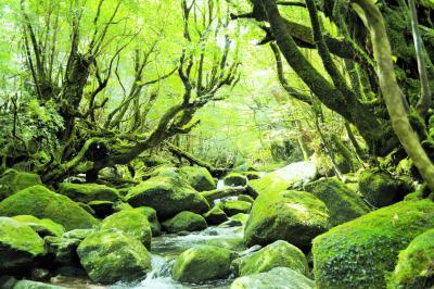 君とイク夏2017②緑あふれる屋久島の、苔むす森へレッツゴー。白谷雲水峡トレッキング♪