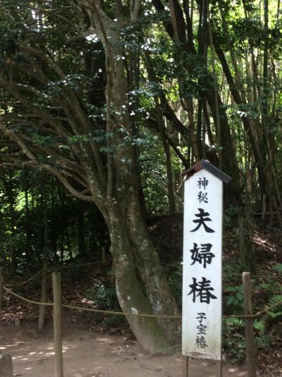 松江城歌舞伎特別公演と足立美術館を訪ねる旅 その3
