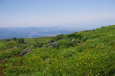 新緑が眩しい久しぶりの伊吹山散策 2017