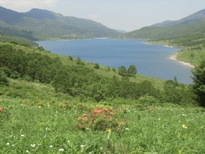 白駒池・チャツボミゴケ・野反湖・草津温泉ツアー