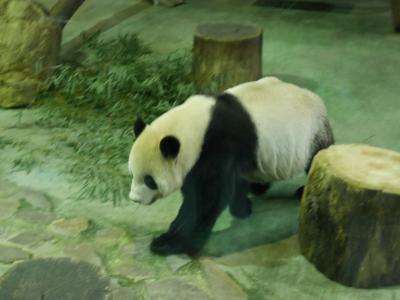 2017年1月 台湾旅行記⑥ 鶯歌&台北動物園 パンダに癒される