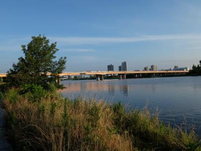 初夏 早朝の荒川散歩