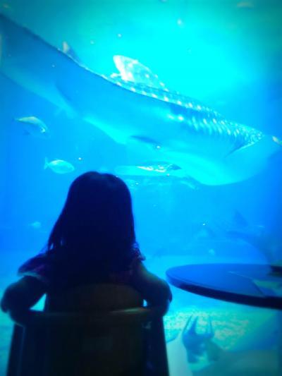 1歳10ヶ月の娘と☆暑い夏の遊び方♪美ら海水族館&初海水浴(2日目)