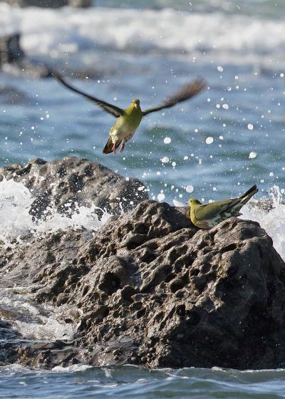 野鳥撮影記録(2017年7月)その2・湘南