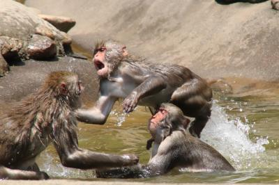 木陰と風に救われた梅雨明け前の猛暑の多摩動物公園(1)ニホンジカの赤ちゃん可愛くて、水遊びニホンザルは面白い!~アフリカ圏からツキノワグマやニホンザルまで