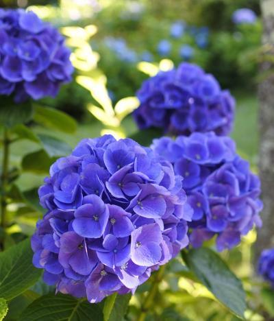 富士屋ホテル ☆ 庭園散歩♪(7月14日)