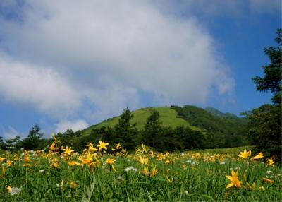 今年3回目の霧降高原  ニッコウキスゲと山野草に会いに