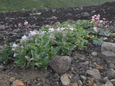 花の山・岩手山を歩く