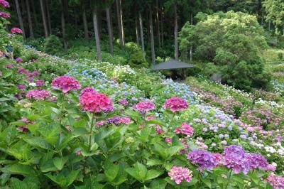 【坂東札所巡礼12-2】どこに行くの?ランチです。その後に紫陽花を見に行きます。