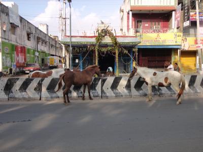 インド訪問記7【ゴープラムの町マドゥライと聖地ラーメーシュワラム、宮殿の町マイソール】チェンナイからカーンチープラムへ
