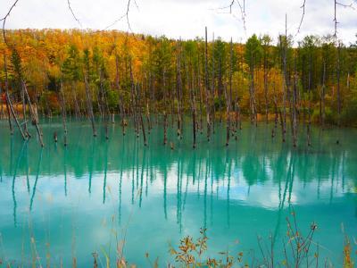 2017年10月  秋の北海道  ~ 青い池と白ひげの滝、東川町「ニセウコロコロ」、紅葉の層雲峡と日帰り温泉