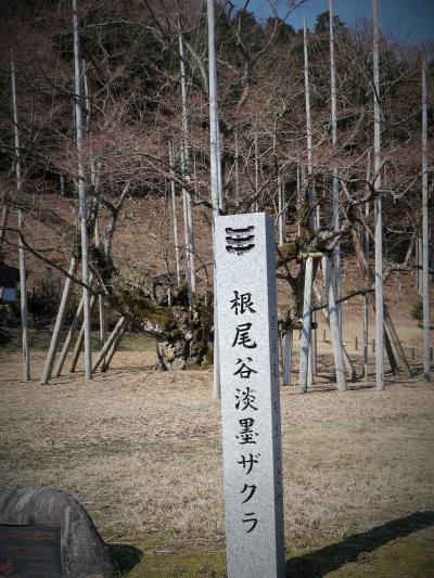 ロワジールホテル大垣⇒淡墨公園 (根尾谷淡墨ザクラ) ☆バス車窓風景