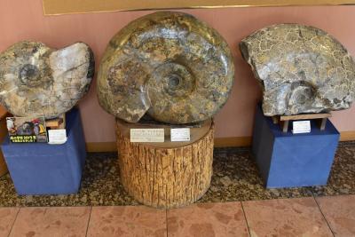 恐竜やアンモナイトの化石が発見される天塩中川(北海道)