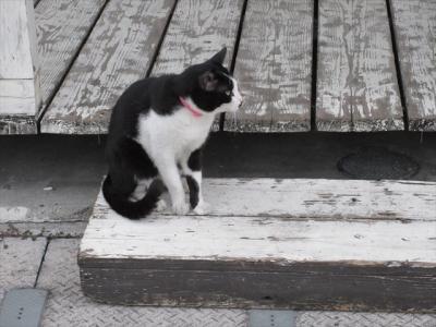 猫探し【八重山諸島(石垣島の猫・Cats in Ishigaki Is)編】