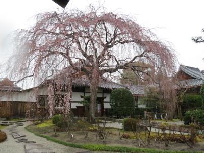 京都の桜にはかなわない^-^)