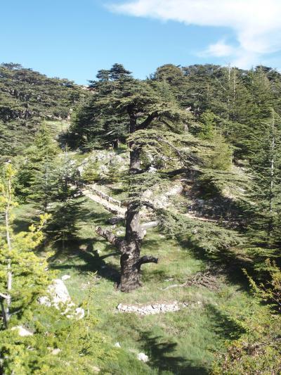 レバノン、世界遺産レバノン杉の峡谷