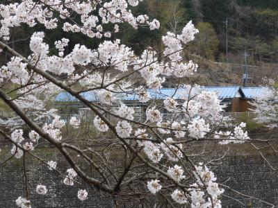 三年ぶりの相方親孝行ツアーin北関東 01足尾銅山に入坑する