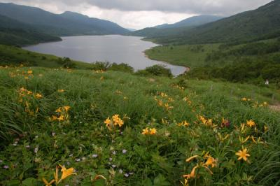ノゾリキスゲ満開の野反湖へ 雨で白砂山は断念