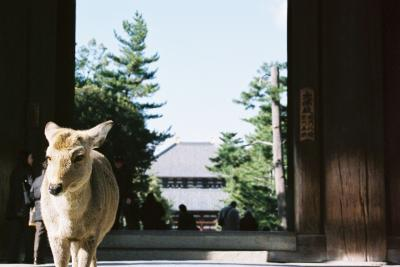 ヒガエリ ナラノタビ 2007.03 初ひとり奈良はお水取り
