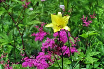 信州・入笠湿原の夏の花